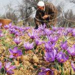 فروشگاه اینترنتی زعفران قائنات مشهد