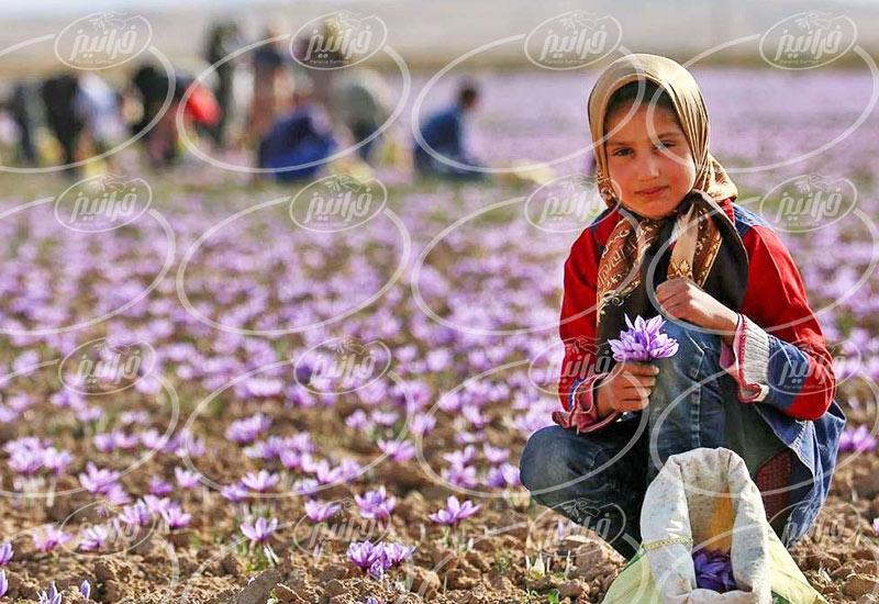 خرید زعفران تربت حیدریه با گرید های مختلف