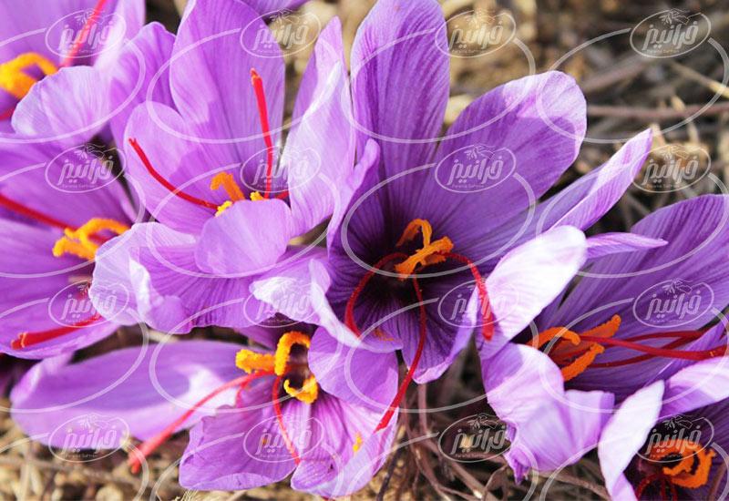 بهترین فروشگاه زعفران آلمان با نرخ یورو و دلار