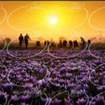 سایت مناسب ترین قیمت زعفران به گرم