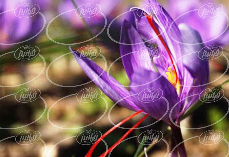 فروش اسپری زعفران ارزان برای صادرات به آلمان